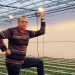 Uitstekende oogst van chrysantenteelt op water