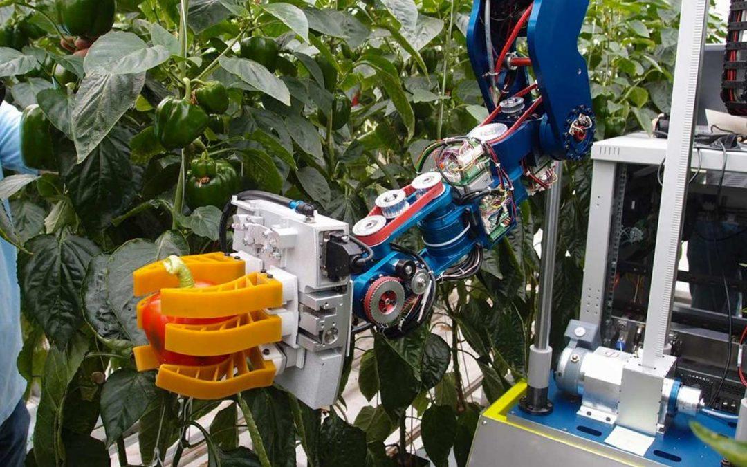 Oogstrobot voor paprika krijgt stap voor stap vorm