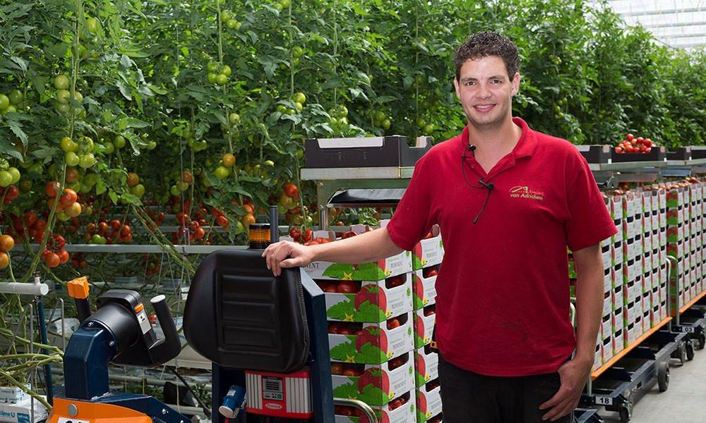 Tomaten oogsten, sorteren en verpakken 3.0