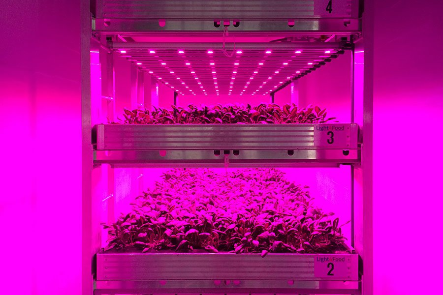 Light4Food specialises in the design, production and assembly of sustainable, closed cultivation systems for the horticulture industry, also called vertical farming.