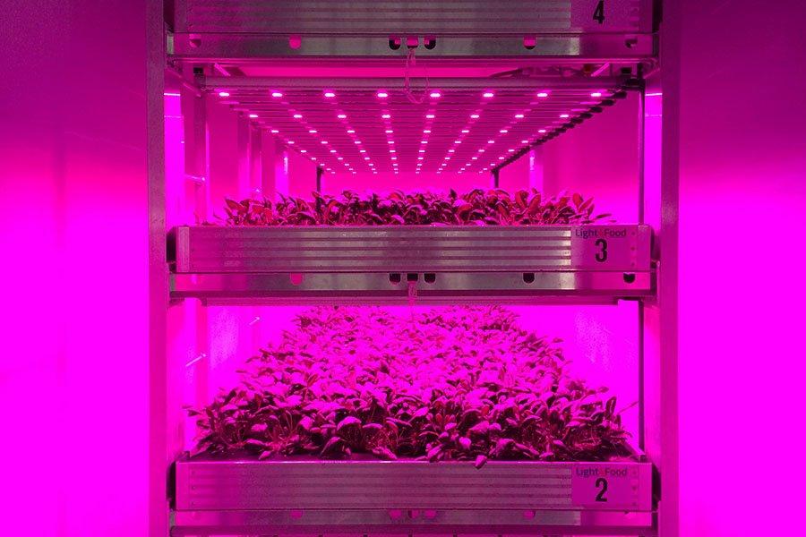 Vertical farming in Nederland vooral voor onderzoeksdoeleinden