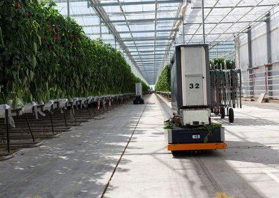 Slimmer paprika's oogsten en sorteren zonder 'butsen'