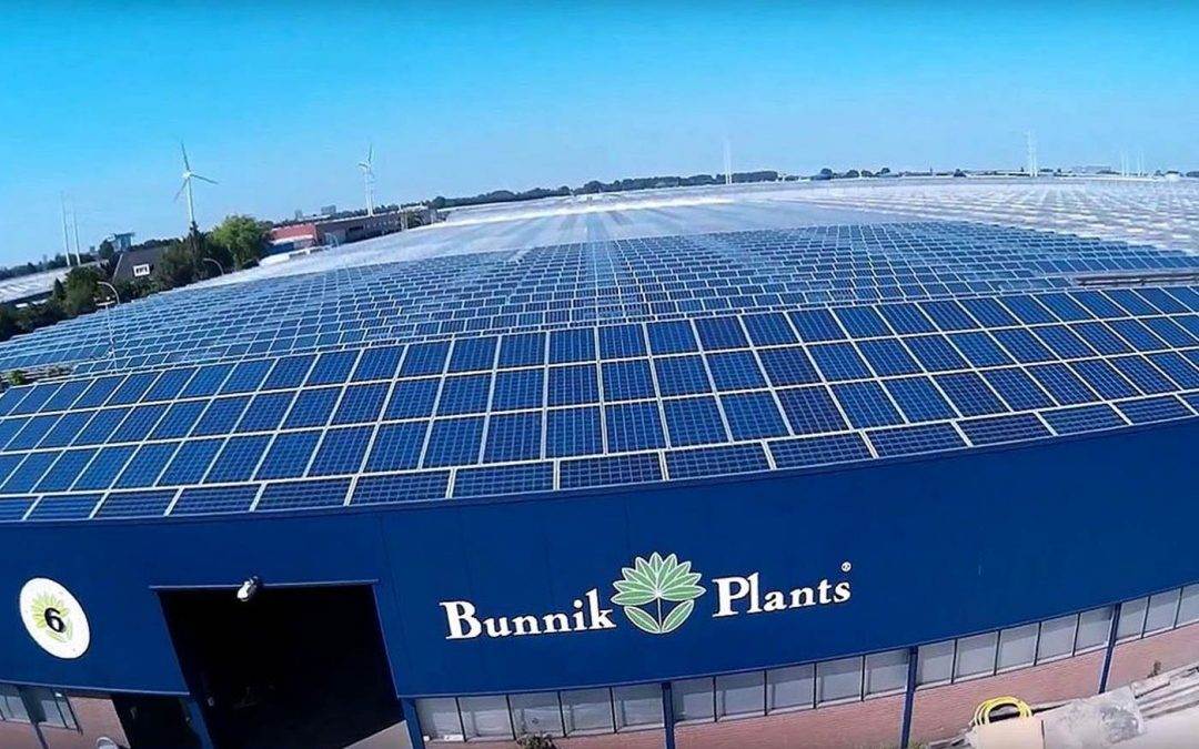 Bunnik Plants stapt over op zonne-energie