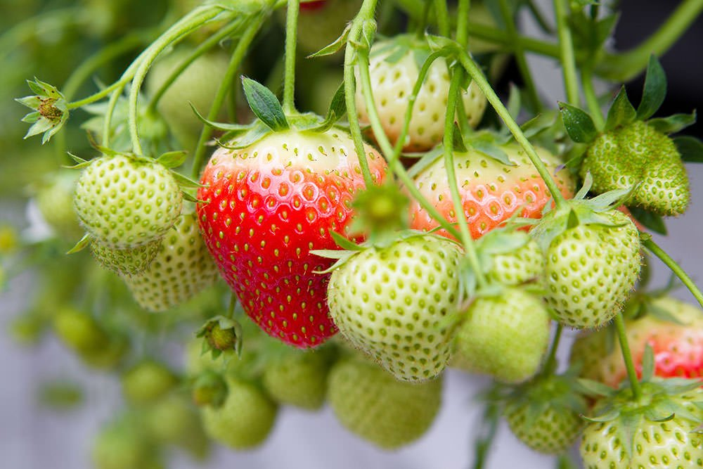 Plantversterkers in steeds meer soorten verkrijgbaar