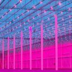 Glastuinbouw in RTL7-programma Doe Maar Duurzaam!