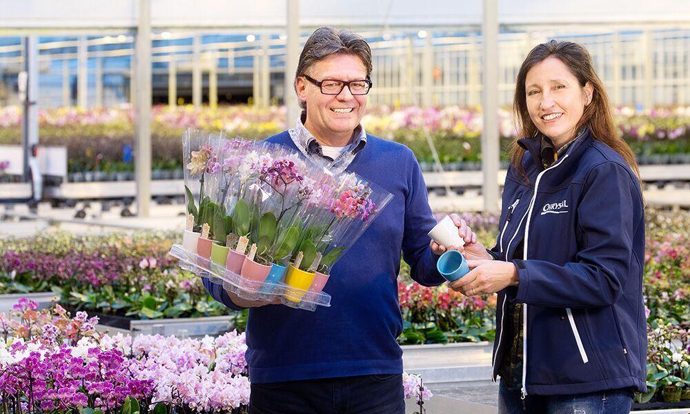 Phalaenopsiskwekerij SO natural innoveert met als doel de houdbaarheid van haar planten in de keten te verbeteren én uitval in het winkelschap te voorkomen.