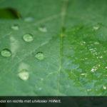 Hulpstoffen geven betere resultaten bij gewasbescherming