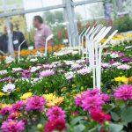 Flower Trials zijn essentieel evenement geworden op sierteeltkalender