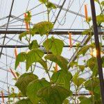 Komkommerteler in Drenthe wekt elektriciteit op uit reststromen