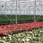 Analysecijfers potplanten schetsen niet altijd het juiste beeld