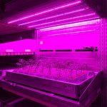 De groeicel van WPS en Certhon bij agro-biotech.