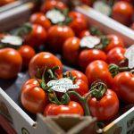 Jaarrond superkwaliteit tomaten dankzij Greenstim