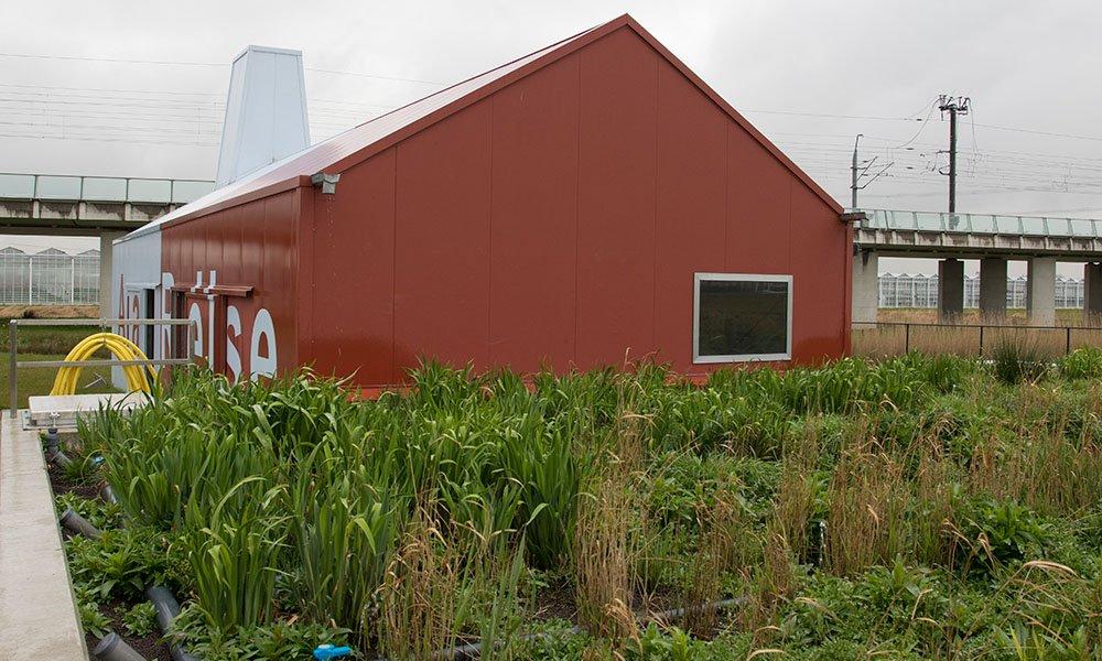 Waterzuiveringsinstallatie met rietfilter voor de glastuinbouw.