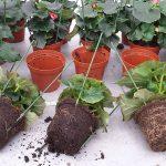 Onderzoek gebruik compost als substraatonderdeel