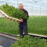 Bladgewassen geschikt voor waterteelt, bij bloemen meer kennisopbouw nodig