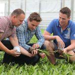 'De dendrobiumplanten groeien duidelijk sneller en uniformer'