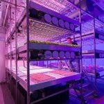 Brightbox, gecontroleerde teeltsystemen, verticaal telen, vertical farming, onderzoek, themabijeenkomst, warme groenteplanten, tuinbouw