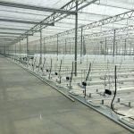 tuinbouw, industrie, glastuinbouw, kassen, innovatie, techniek, kassenbouw, kassenbouw, Certhon, Roemenie, turnkey project, groenteteelt