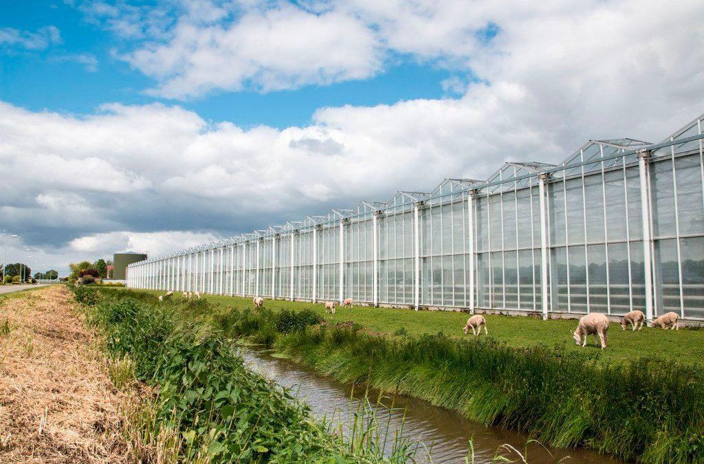 Belgische glastuinbouw bestudeert voorbeelden Nederlandse geothermie