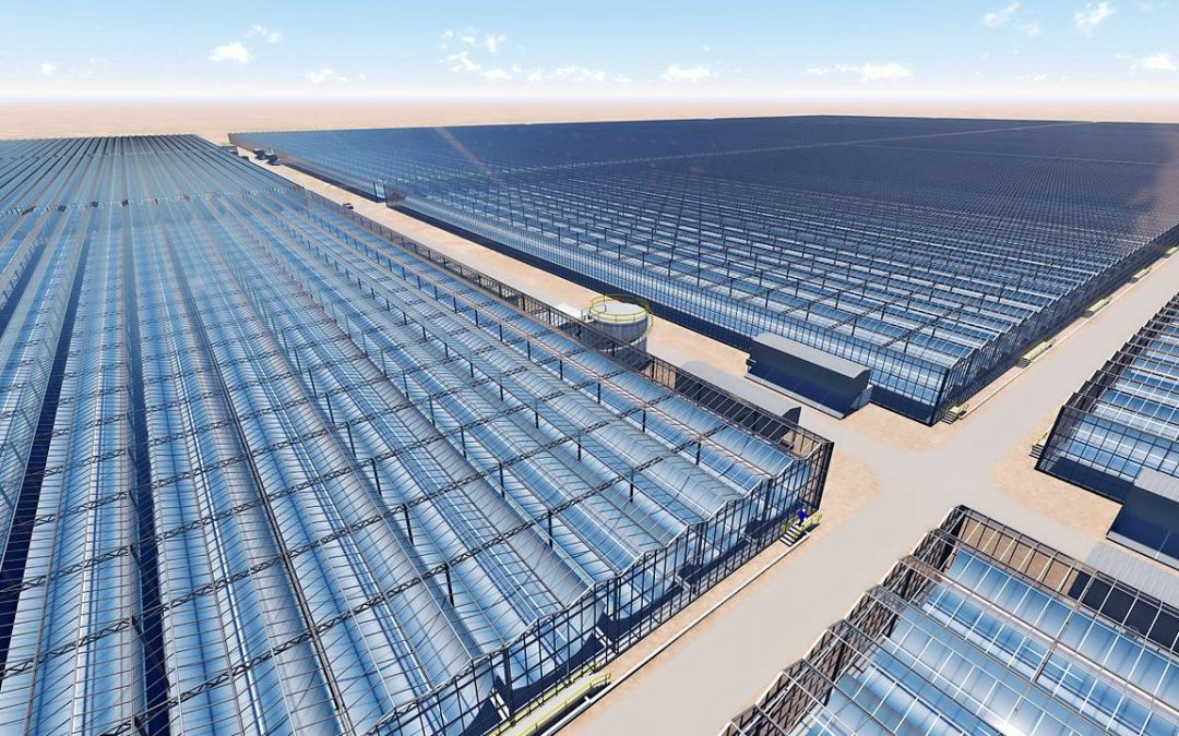 Kubo bouwt 190 hectare solarkassen in Oman