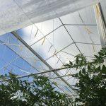 tuinbouw, industrie, glastuinbouw, tuinbouwglas, lichttransmissie, NEN-normen, diffuus glas, gecoat glas, kasdekmaterialen, schermmaterialen, informatiebijeenkomst, meetmethoden