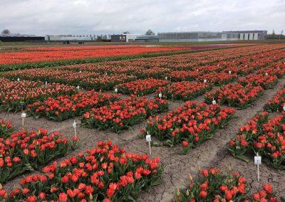 Proeftuin Zwaagdijk, gewasbescherming, toekomst, bloembollen, chemie, groene middelen, lezingen, proeven, bloembollenteelt