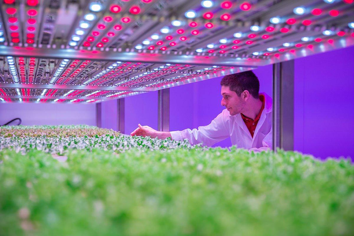 tuinbouw, innovatie, glastuinbouw, city farming, urban farming, vertical farming, onderzoek, GrowWise onderzoekscentrum, Philips, Priva, LED-verlichting, meerlagenteelt, bladgroenten, kruidenteelt, aardbei