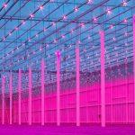 tuinbouw, industrie, glastuinbouw, innovatie, duurzaamheid, energie, energiemanagement, energie-tools, energie-advies, energieverbruik, AgroEnergy