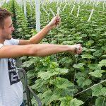 In het najaar/winter van 2015/2016 hadden telers te maken met zeer hoge temperaturen voor de tijd van het jaar. Dit is van invloed op plantontwikkeling.