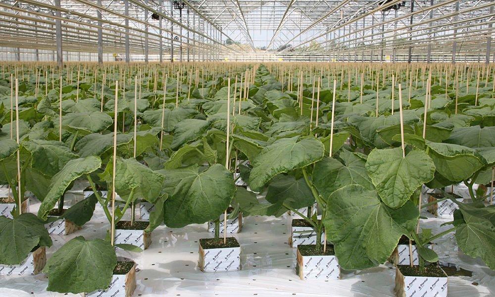 Bij jonge plantjes water geven, is dat nodig?