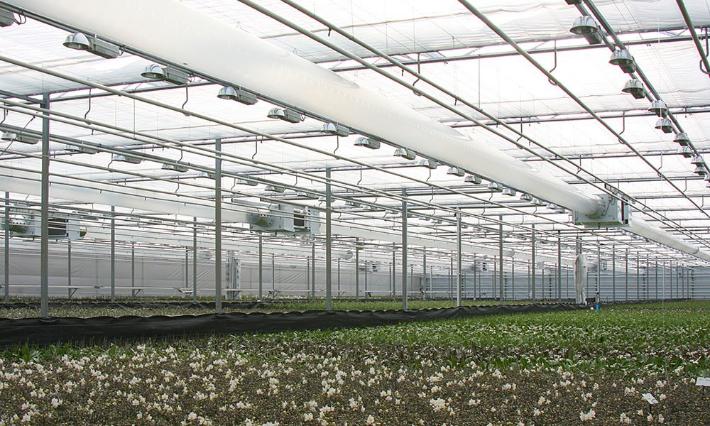 Onderzoek naar het effect van lichtkleur op de plant en het efficiënt toedienen van licht en CO2 zijn belangrijke onderzoeksrichtingen vinden ondernemers.