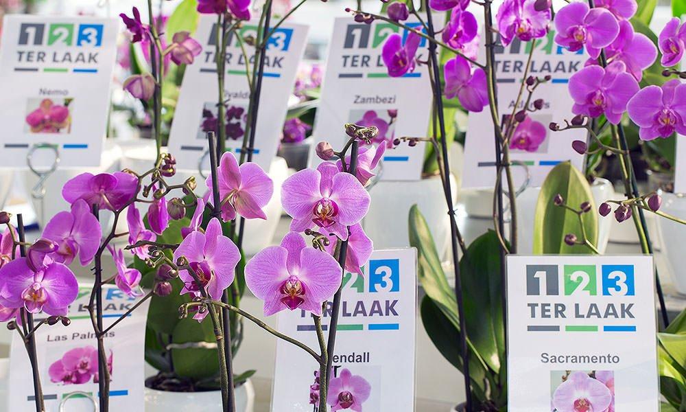 Orchideeen bij Ter Laak Orchids
