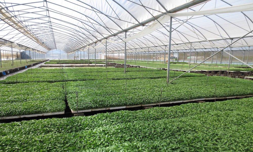 Regering ziet meer in export tuinbouwtechnologie dan in tuinbouwproducten