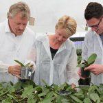 Meer maatwerk mogelijk in bemesting voor pot- en grondteelten
