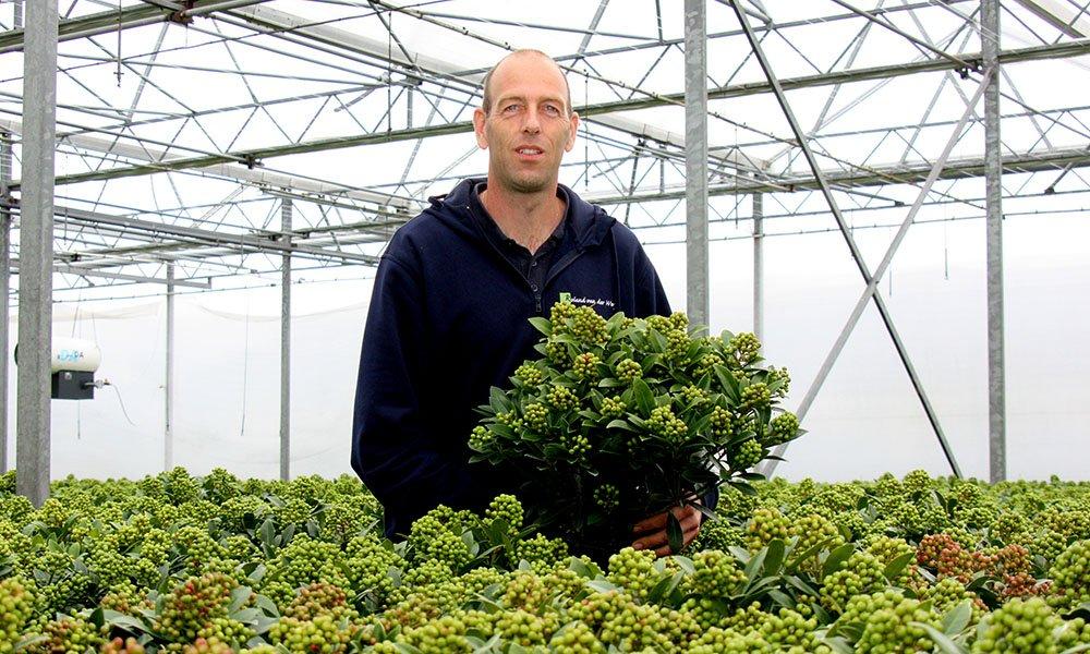 'Glazen Tulp' winnaar timmert met opvallende skimmia flink aan de weg