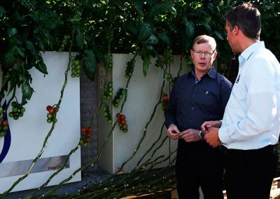 'A good climate computer system is essential to prevent diseases in the crop', says tomato grower Frank van Kleef.