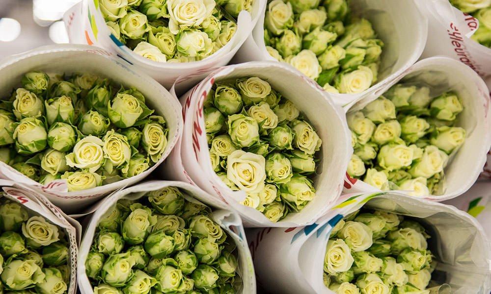 verpakte witte rozen