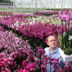 biologisch geteelde phalaenopsis van Stolk Flora