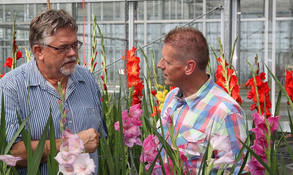 Martin van Dam (links) en Marco van Dalen in kas met gladiolen.