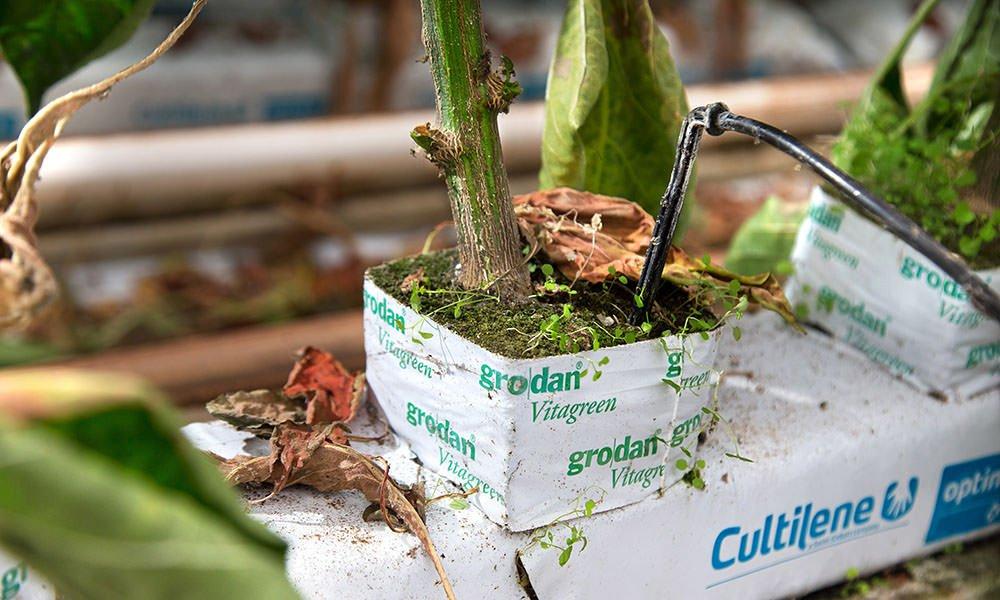 Kliekjes eten in de kas: een model voor telen zonder emissies