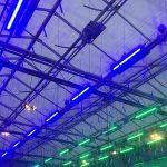 Led-verlichting in kas van Wageningen UR