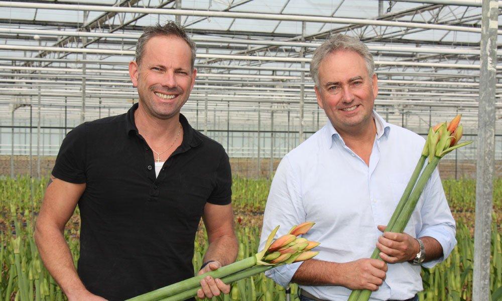 Wilfred en Jack Janssen van kwekerij Beaumonde hebben 2,4 ha met amaryllis, verdeeld over twee locaties. Ze streven naar vernieuwing.