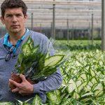 Met geautomatiseerd inhoezen kunnen besparing op arbeidskosten groot zijn. De Lierse potplantenteler Ted Vijverberg werkt al acht jaar met een inhoesrobot.