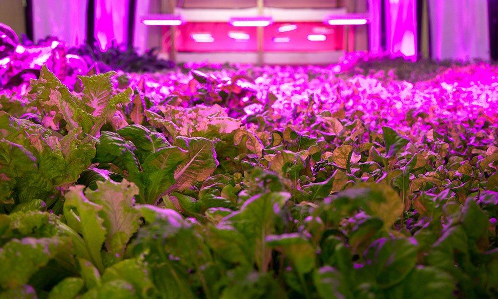 Door Verticaal Telen is de oogst van groenten nu het hele jaar door mogelijk