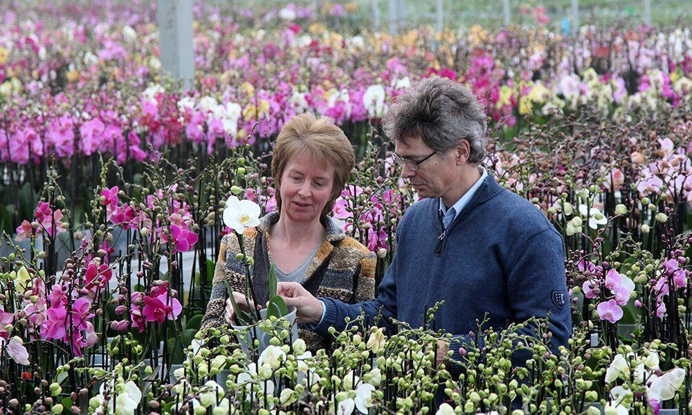 Nieuwe voedingsschema's phalaenopsis voor veranderde teeltwijze