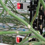 Preciezer spuiten bespaart bij jonge potplanten 20-35% gewasbeschermingsmiddel. Bij oudere planten is dat 55%. Dit zijn resultaten van een demoproject.