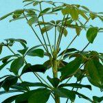 Planten hebben de zwaartekracht nodig. De plant 'voelt' van welke kant de zwaartekracht komt met zetmeelkorrels en door vervorming van celmembranen.