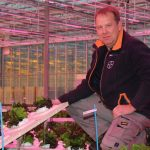 Bedrijfsleider Martin Voorberg nam het initiatief om LED's boven een teeltbed sla op te hangen om kleur en kwaliteit van de sla te verbeteren.