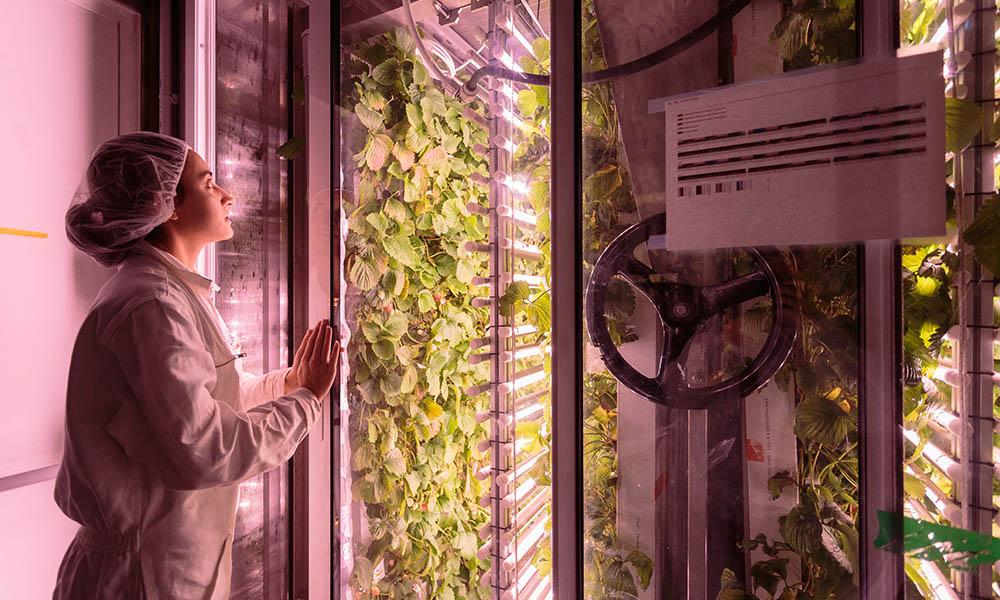 Start-up Agricool aardbeienteelt in zeecontainer