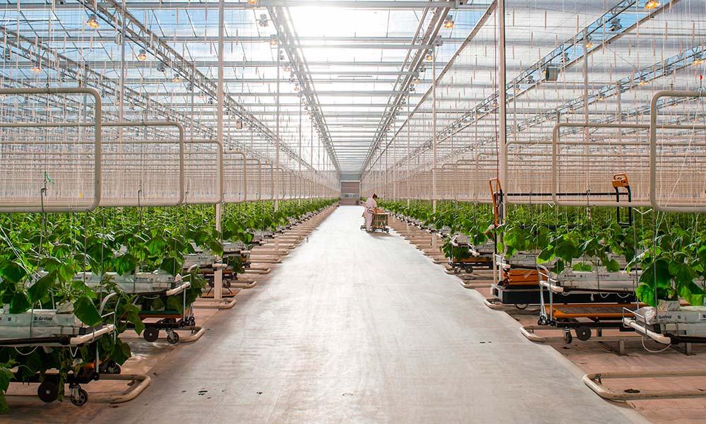 Serres Toundra gebouwd met Nederlandse kennis en technologie